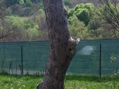 Natura ne învață…