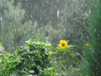 Ploaia…