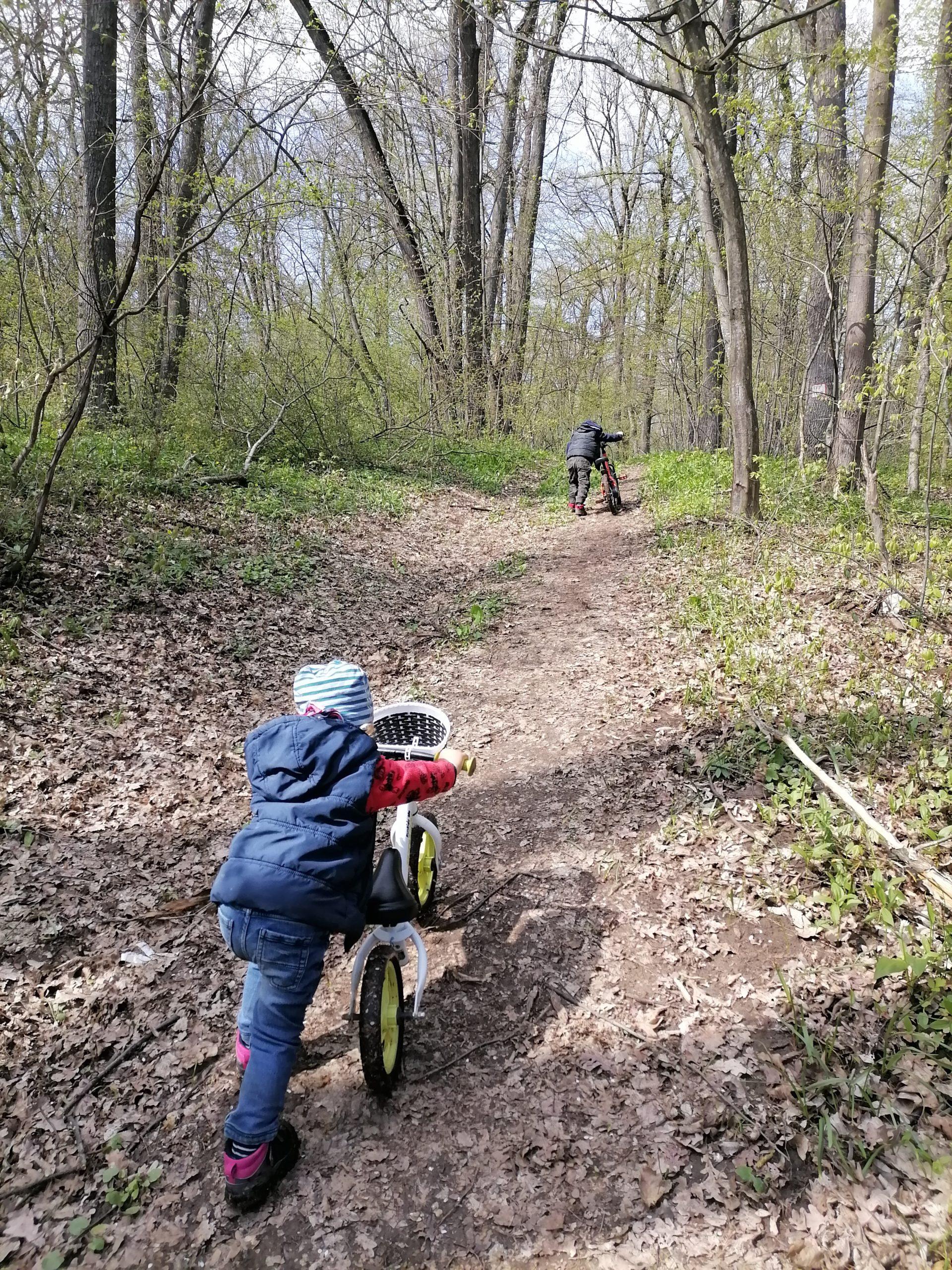 off-road cu biciclete prin pădure după leurda