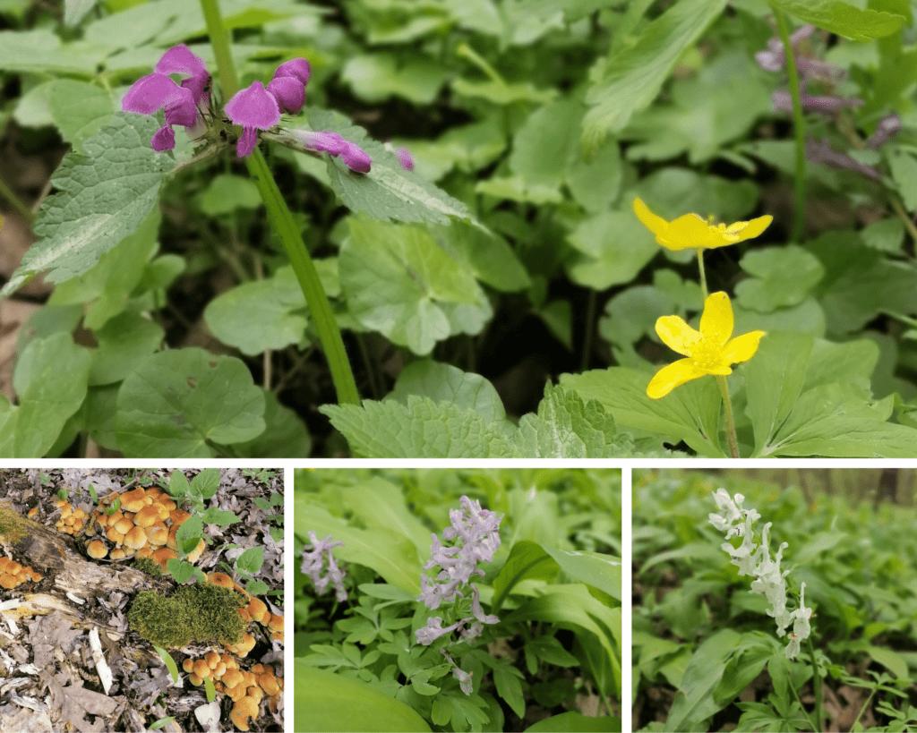 flori de pădure